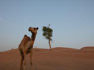 dubai-desert-safari-429072-m
